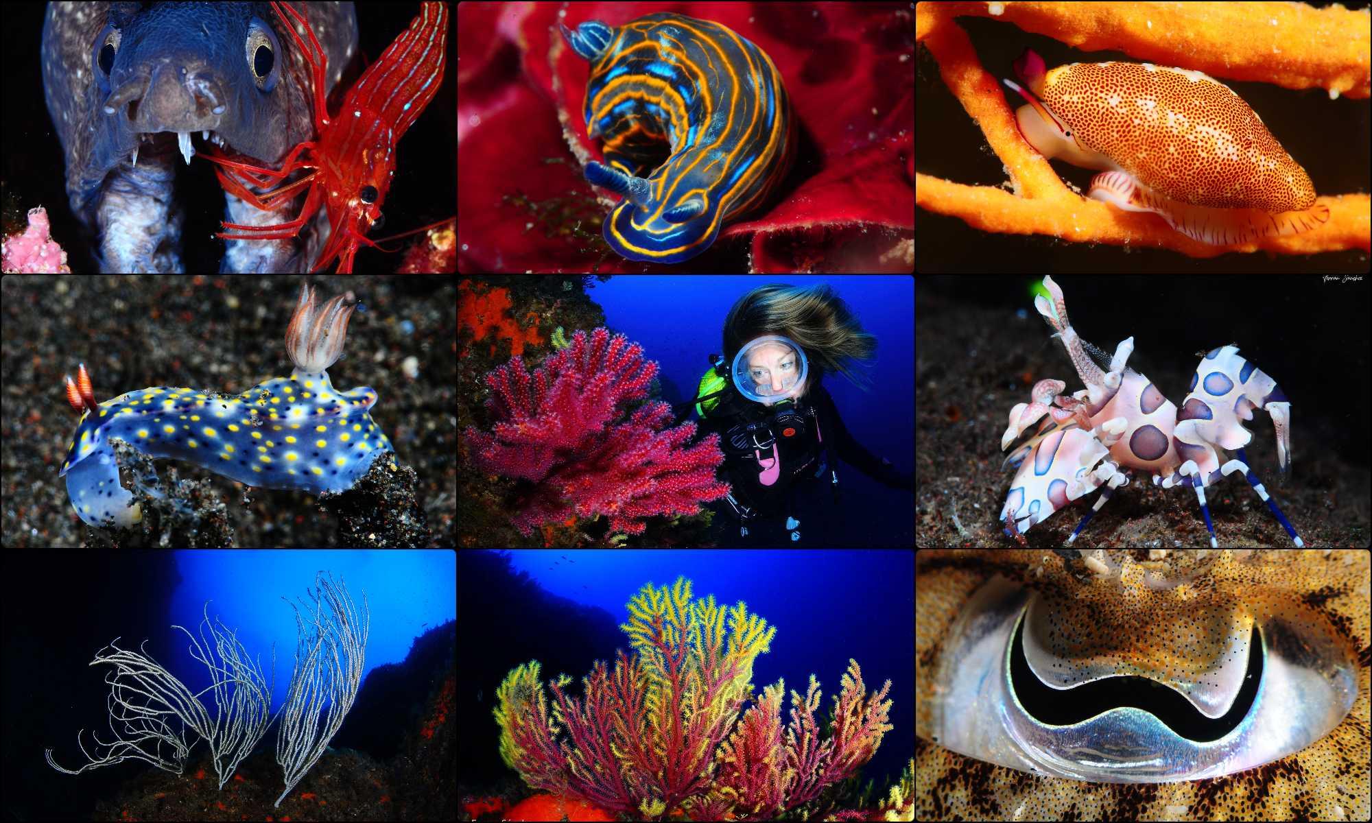 Donde bucear a través de Fotografías Submarinas