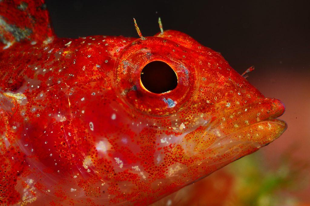 mejores inmersiones maresme cabeza de pez