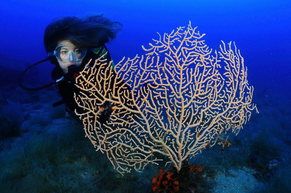 Inmersiones en el maresme Buceadora observando una gran Gorgonia blanca