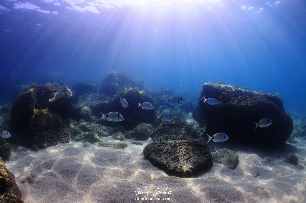 buceo en costa brava paisaje submarino