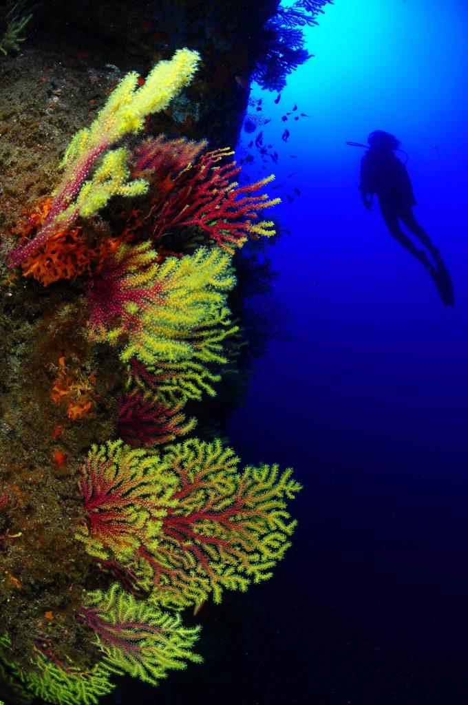 inmersiones en llafranc paisaje ullastres