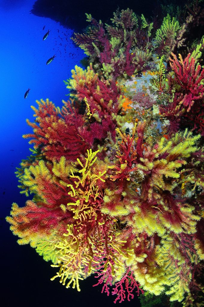 mejores inmersiones llafranc costa brava paisaje ullastres III