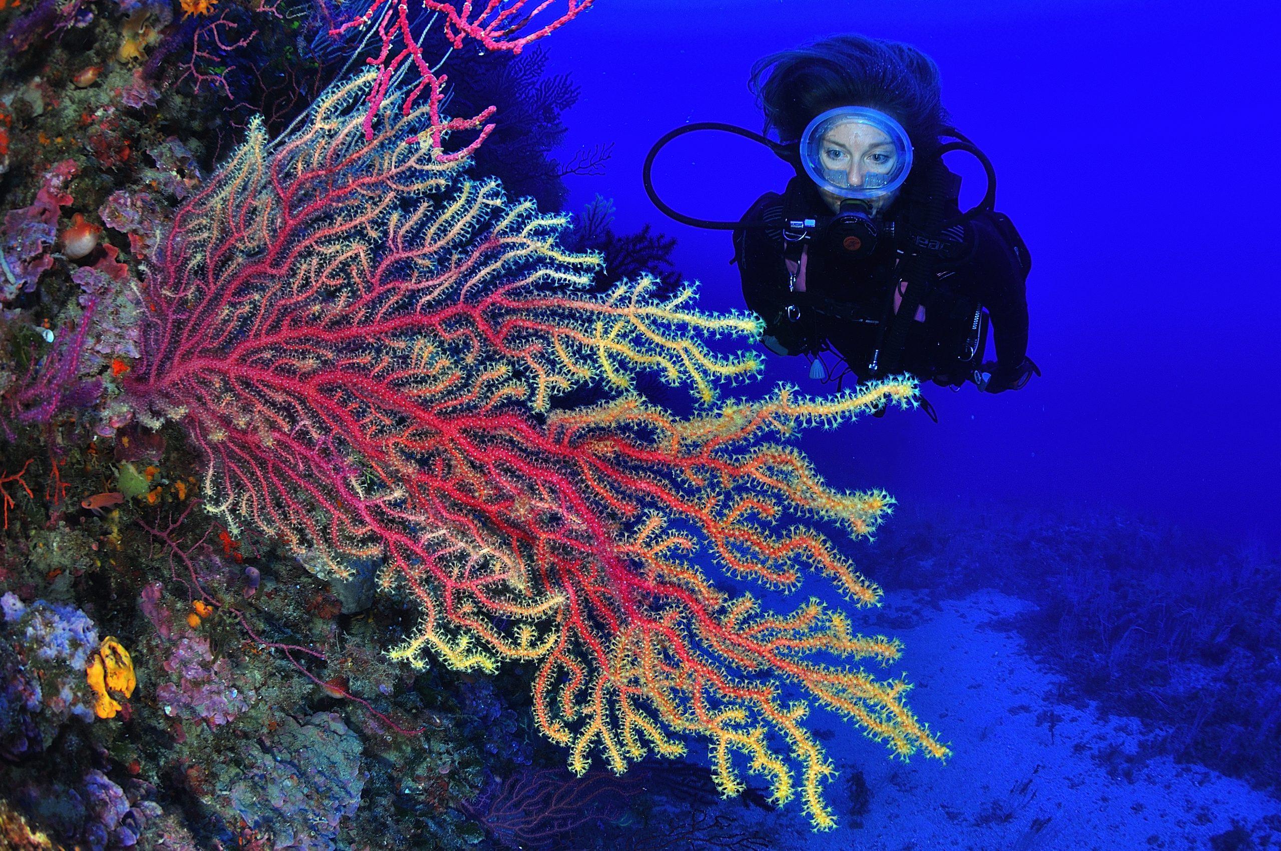 buceadora observando gorgonias rojas en la inmersione el molar