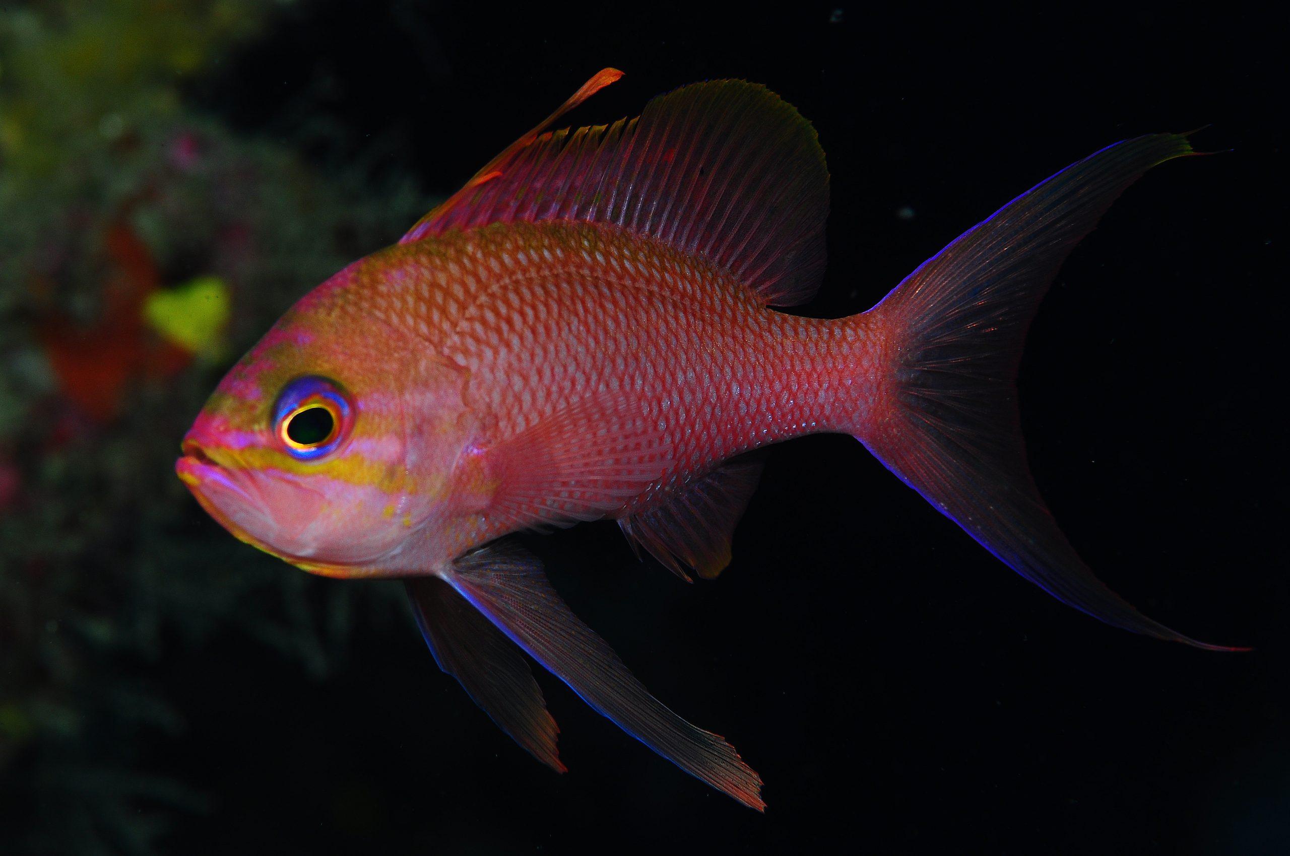 inmersión en el woodside peces