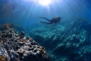 Buceo en Port de la Selva, Inmersión en el Molar